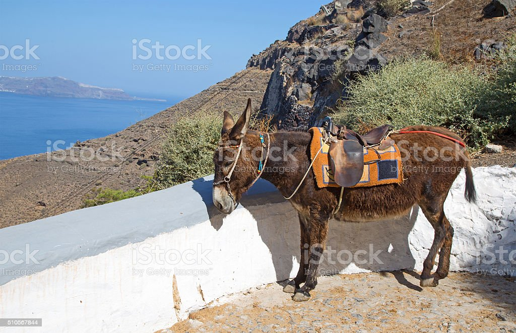 Santorini Donkey stock photo