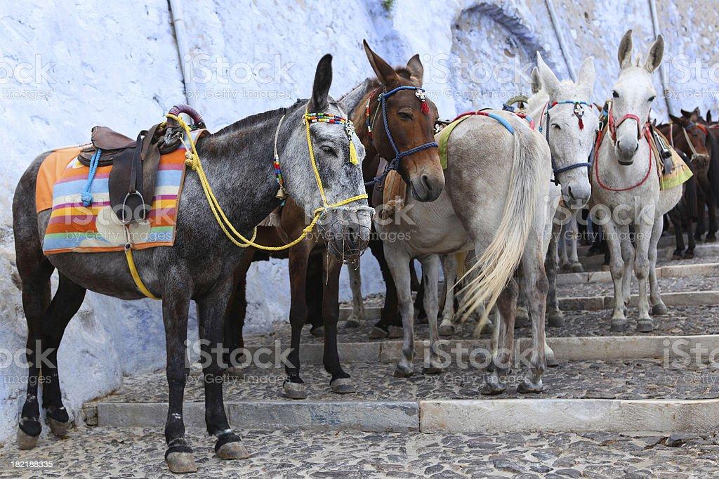Santorini Donkeys royalty-free stock photo