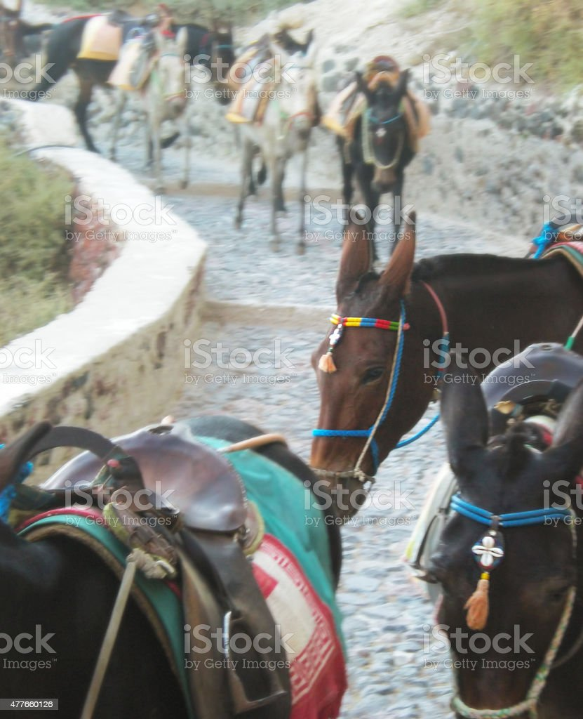 Santorini donkeys stock photo