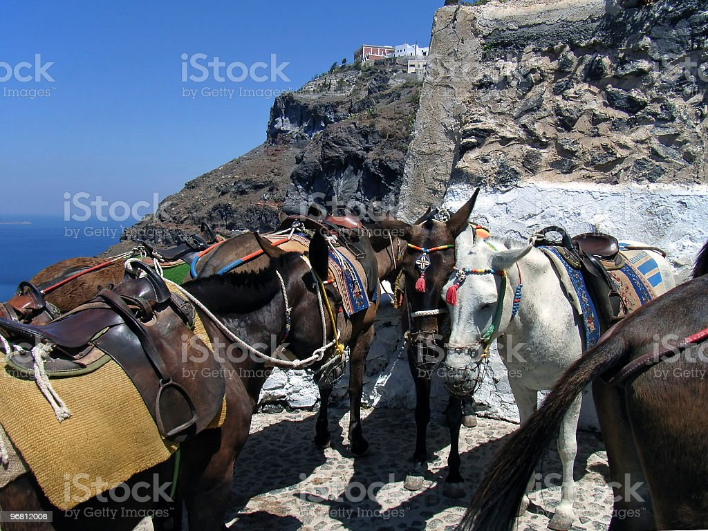 Santorini donkeys royalty-free stock photo