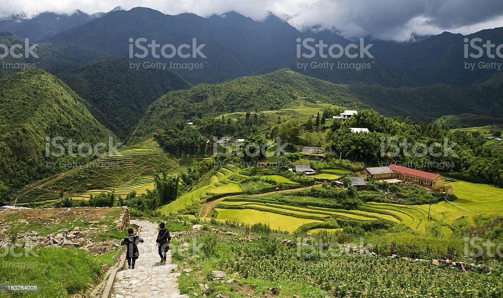 Sapa Rice Fields stock photo