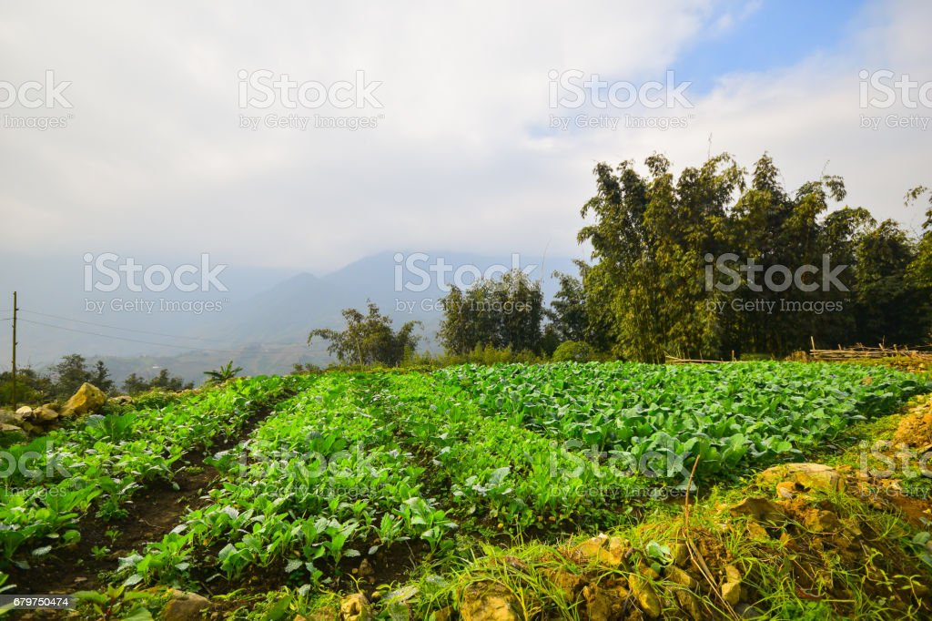 Sapa vietnam stock photo