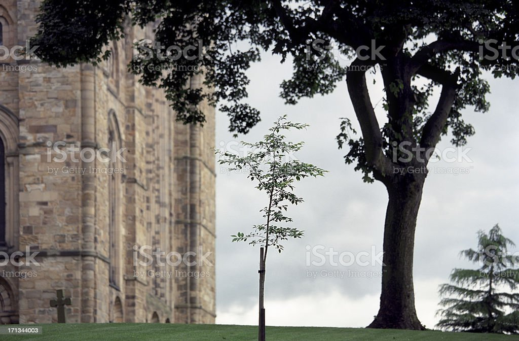 Sapling at the Church, new life in nature royalty-free stock photo