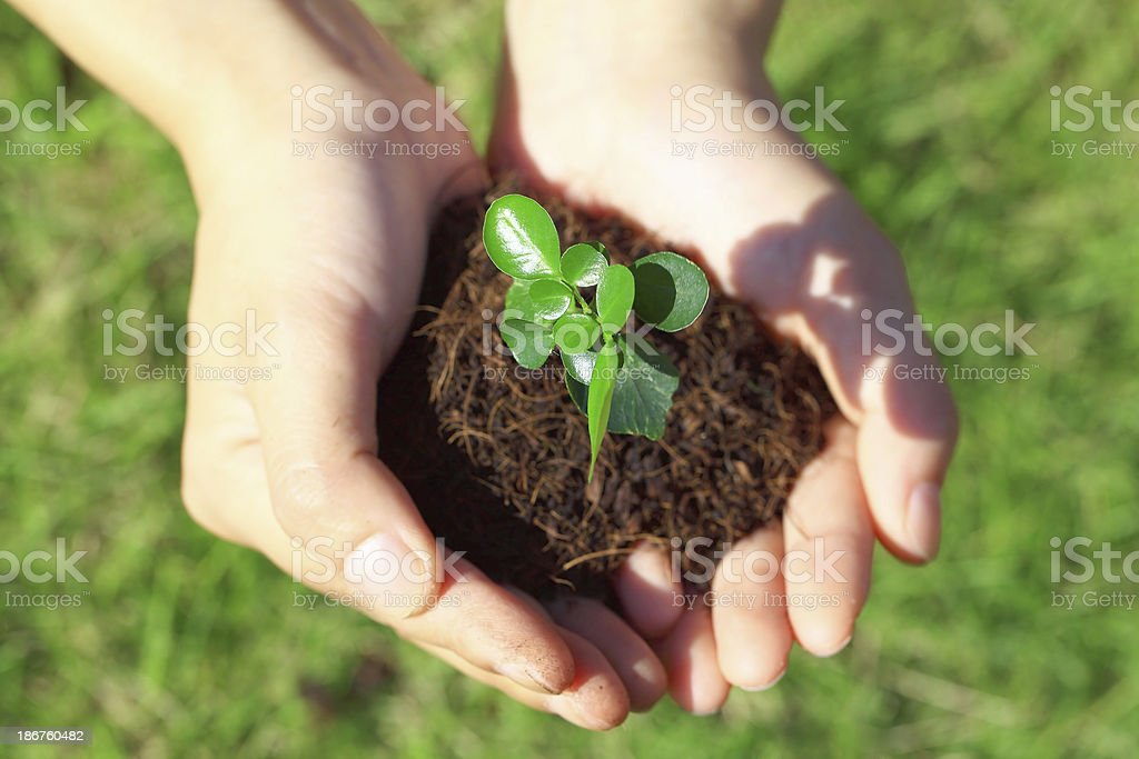 Sapling in Hand royalty-free stock photo