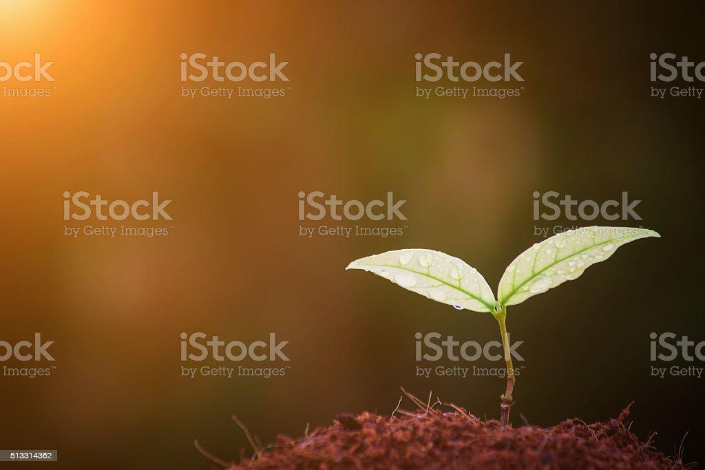 Sapling stock photo