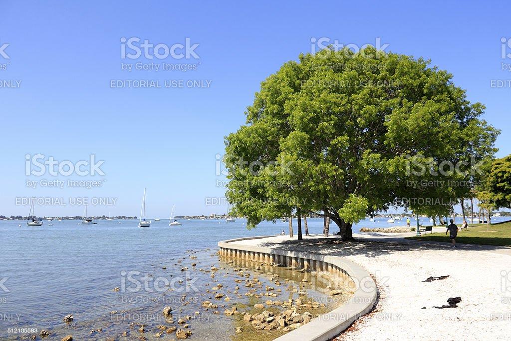 Sarasota Island Park and Marina stock photo