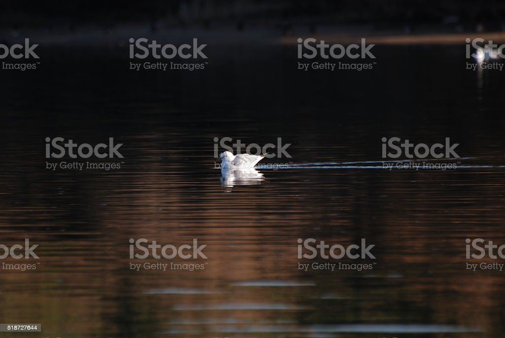 Sardegna e fauna stock photo