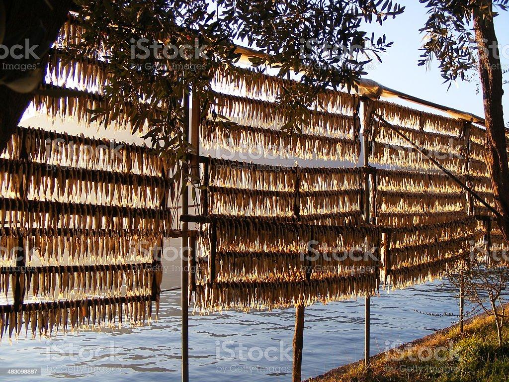 sardina essiccata tradizional ,lago di Iseo ,Italia stock photo