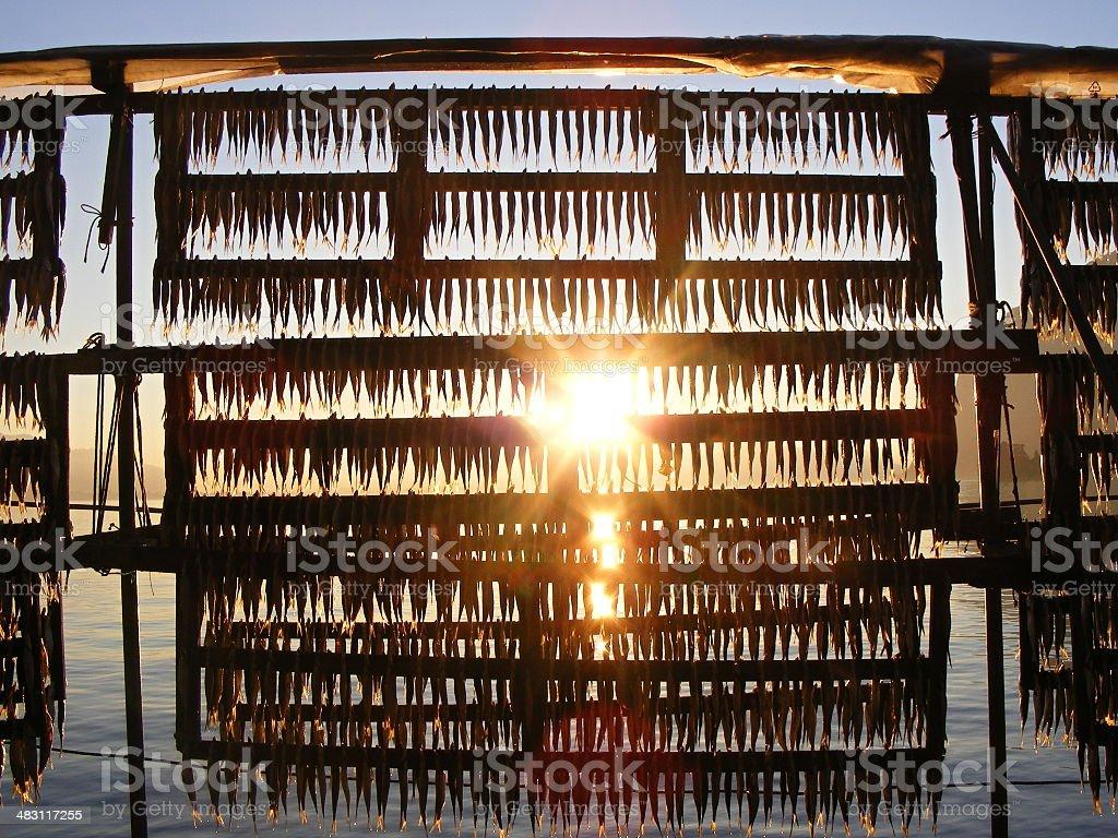 sardina essiccata tradizional ,lago di Iseo  Lombardia stock photo