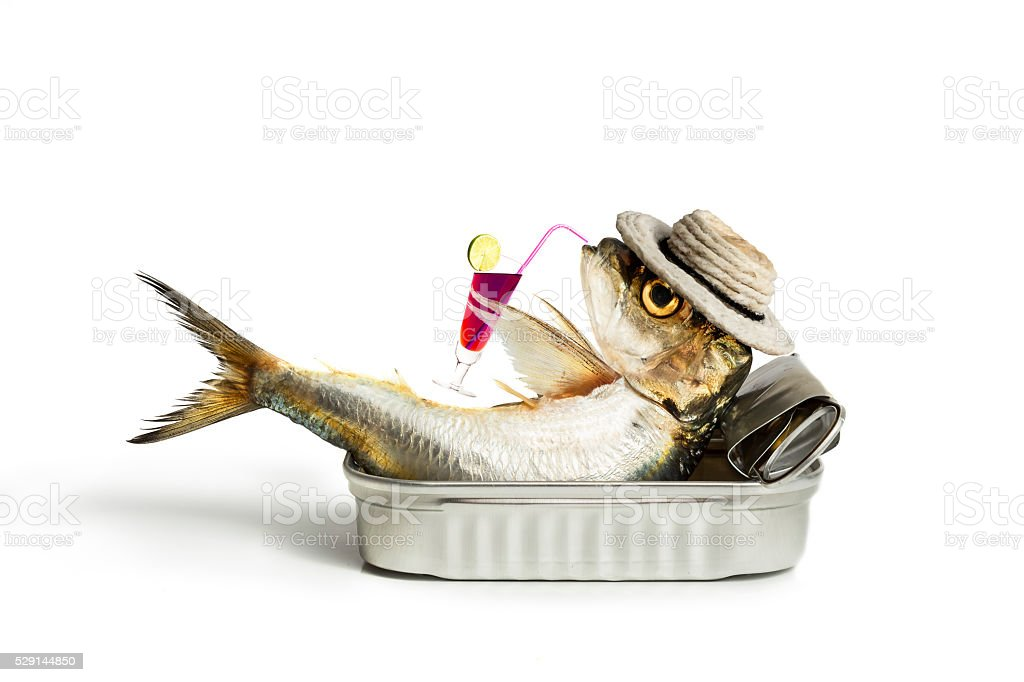 Sardine drinking stock photo