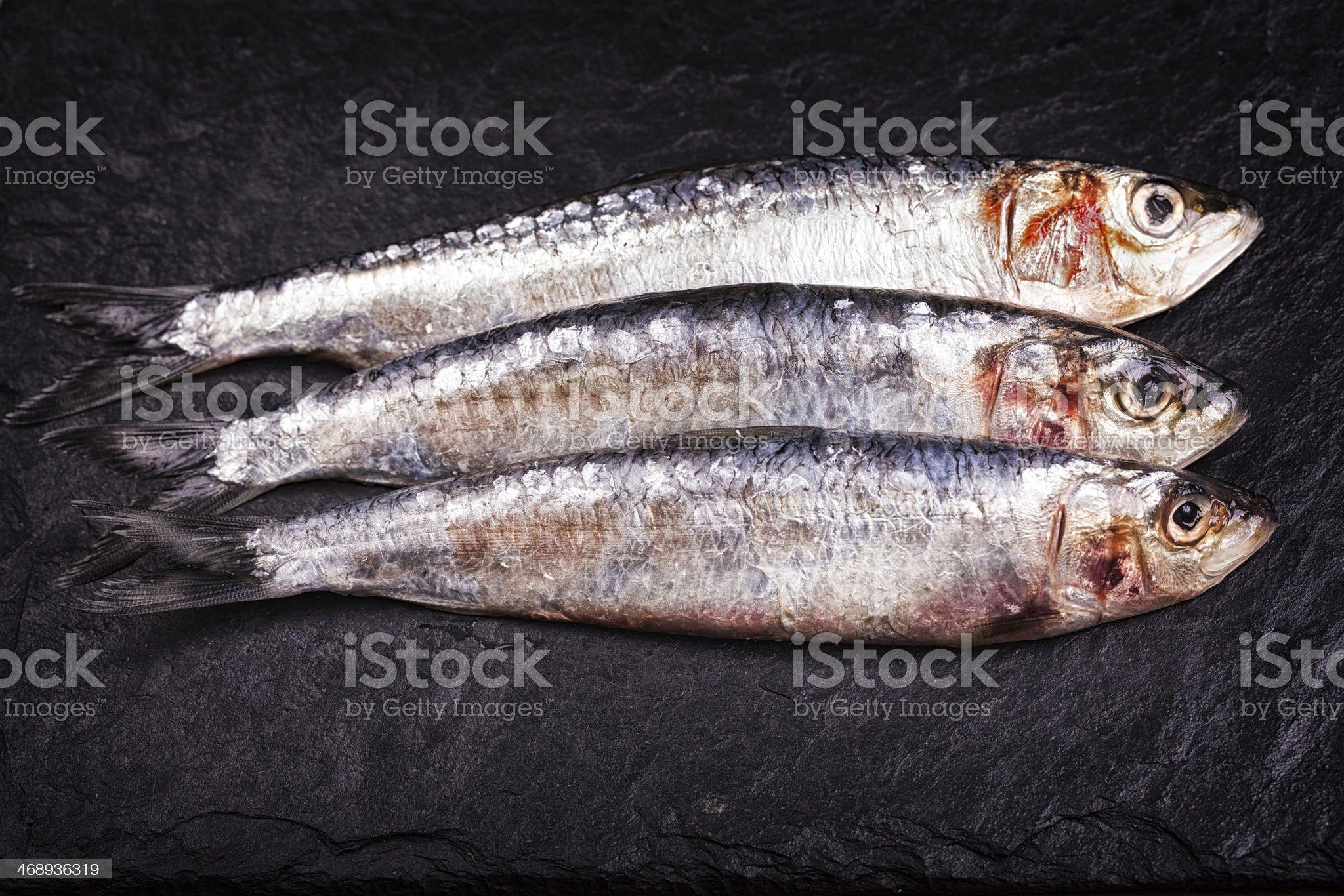 Sardines high contrast royalty-free stock photo
