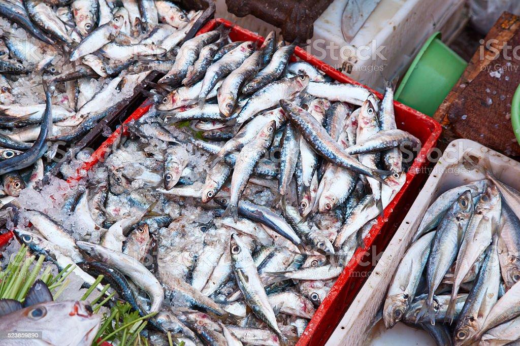 Sardines on display. Marrakech. Morocco. stock photo