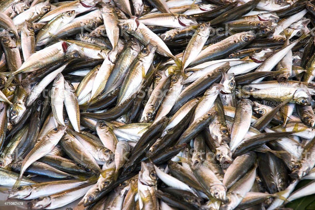 Sardines or Hamsi / Istanbul stock photo