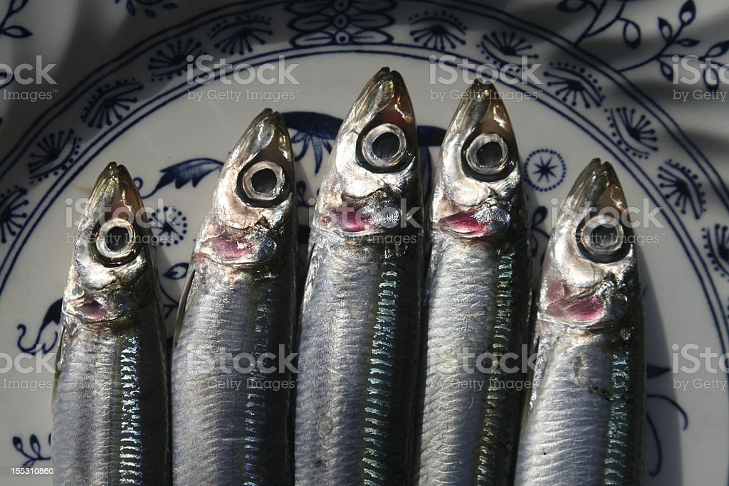 Sardines royalty-free stock photo