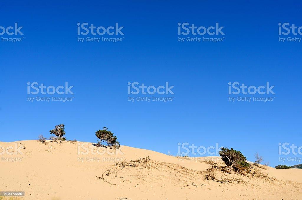 Sardinia, Dunes of Porto Pino stock photo