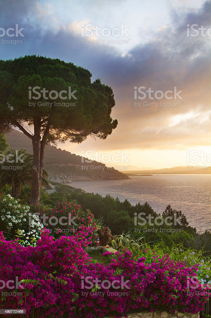 Sardinia in bloom stock photo