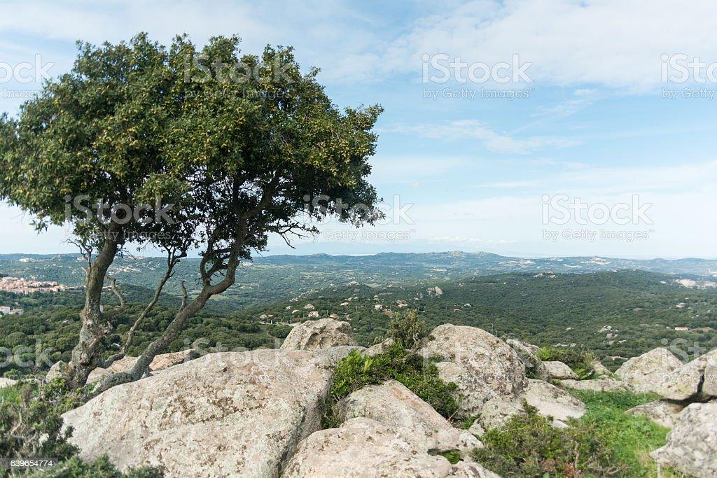 Sardinia panorama stock photo