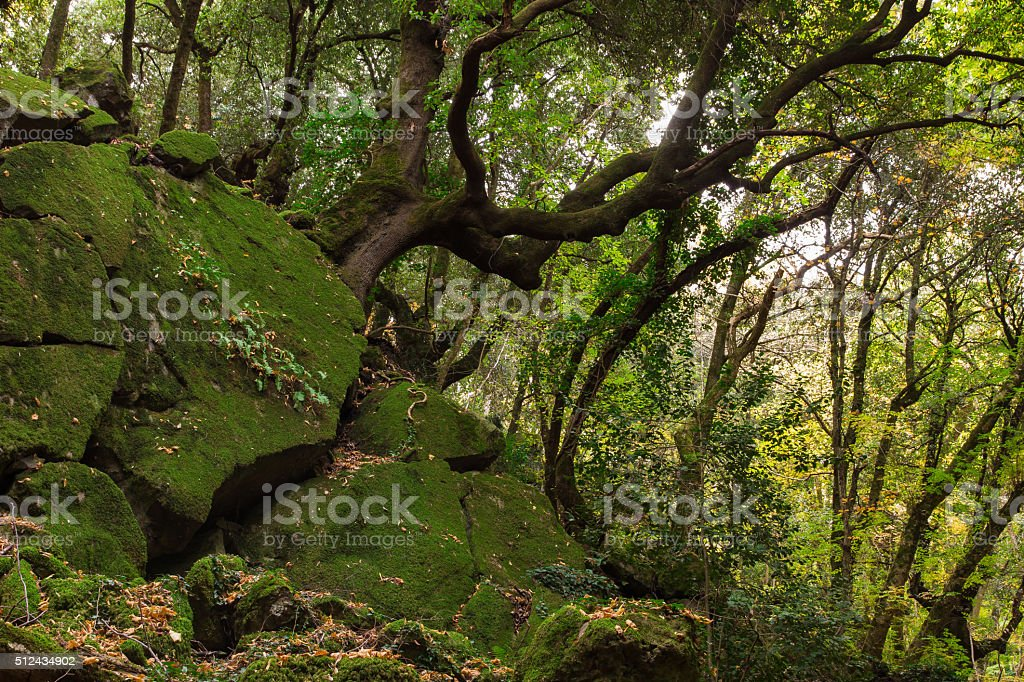 Sasseto woods near Torre Alfina, Lazio stock photo