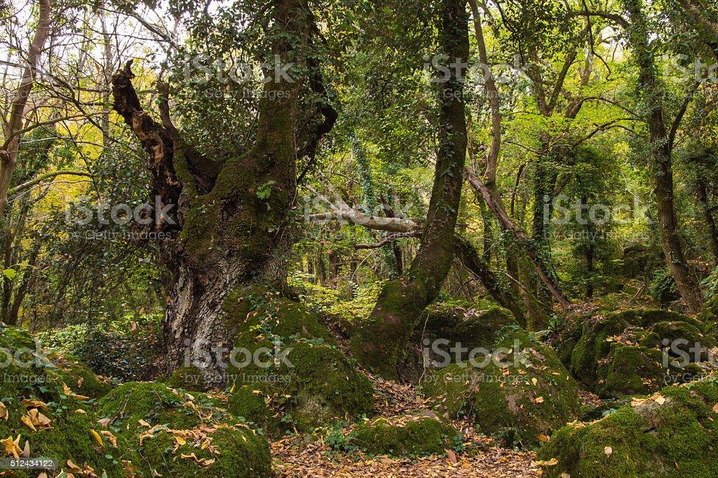 Sasseto woods of Torre Alfina, Lazio - Italy. stock photo