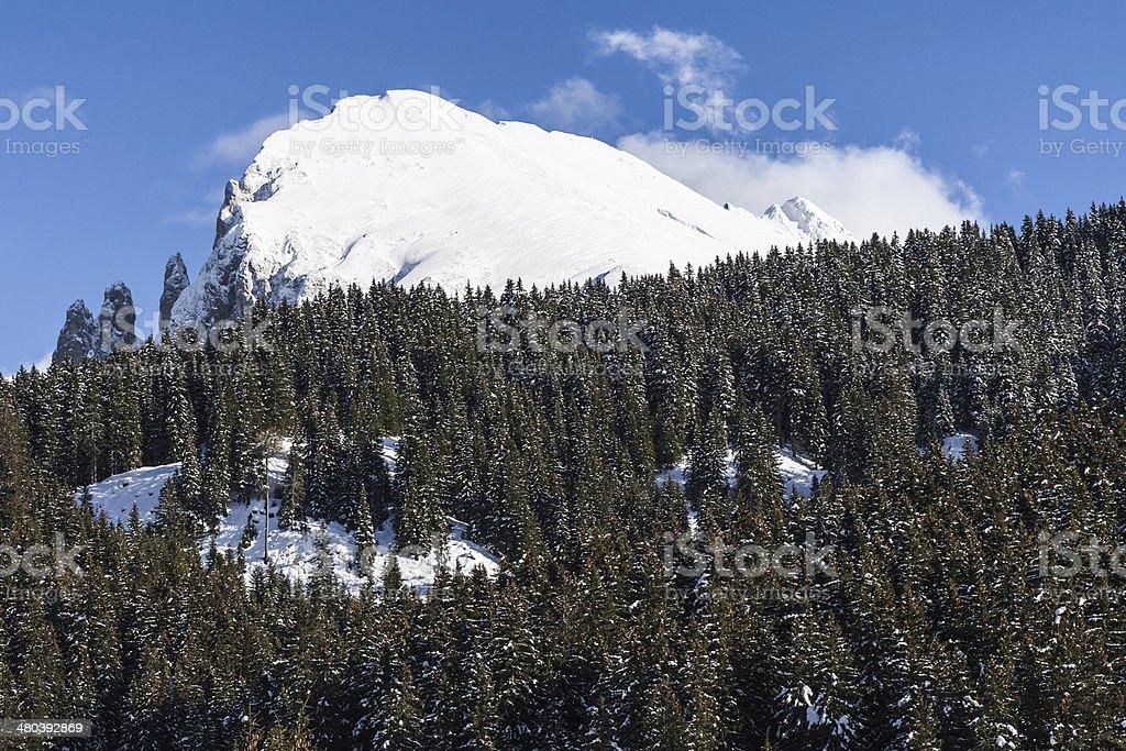 Sassplat mount arises beyond Seiser Alm woods, in the Dolomites stock photo