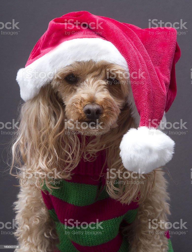 Sassy Santa Dog royalty-free stock photo
