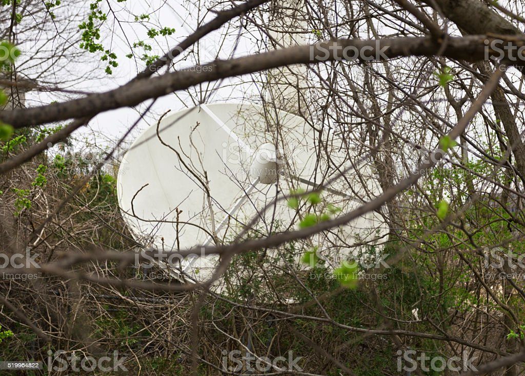 Satellite Dish in a Tangle of Branches stock photo