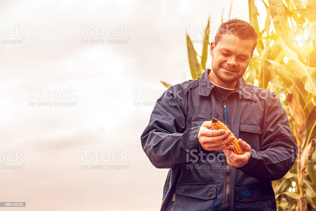 Satisfied Farmer holding corn stock photo