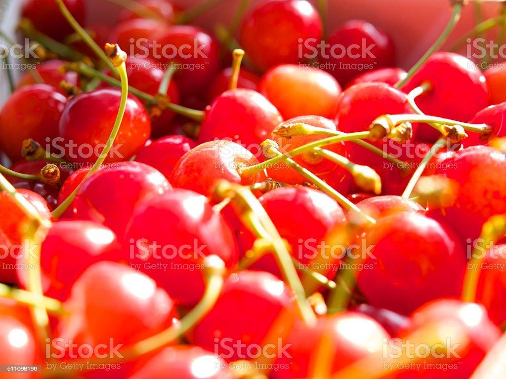 Satonishiki,most popular Cherry in Japan stock photo
