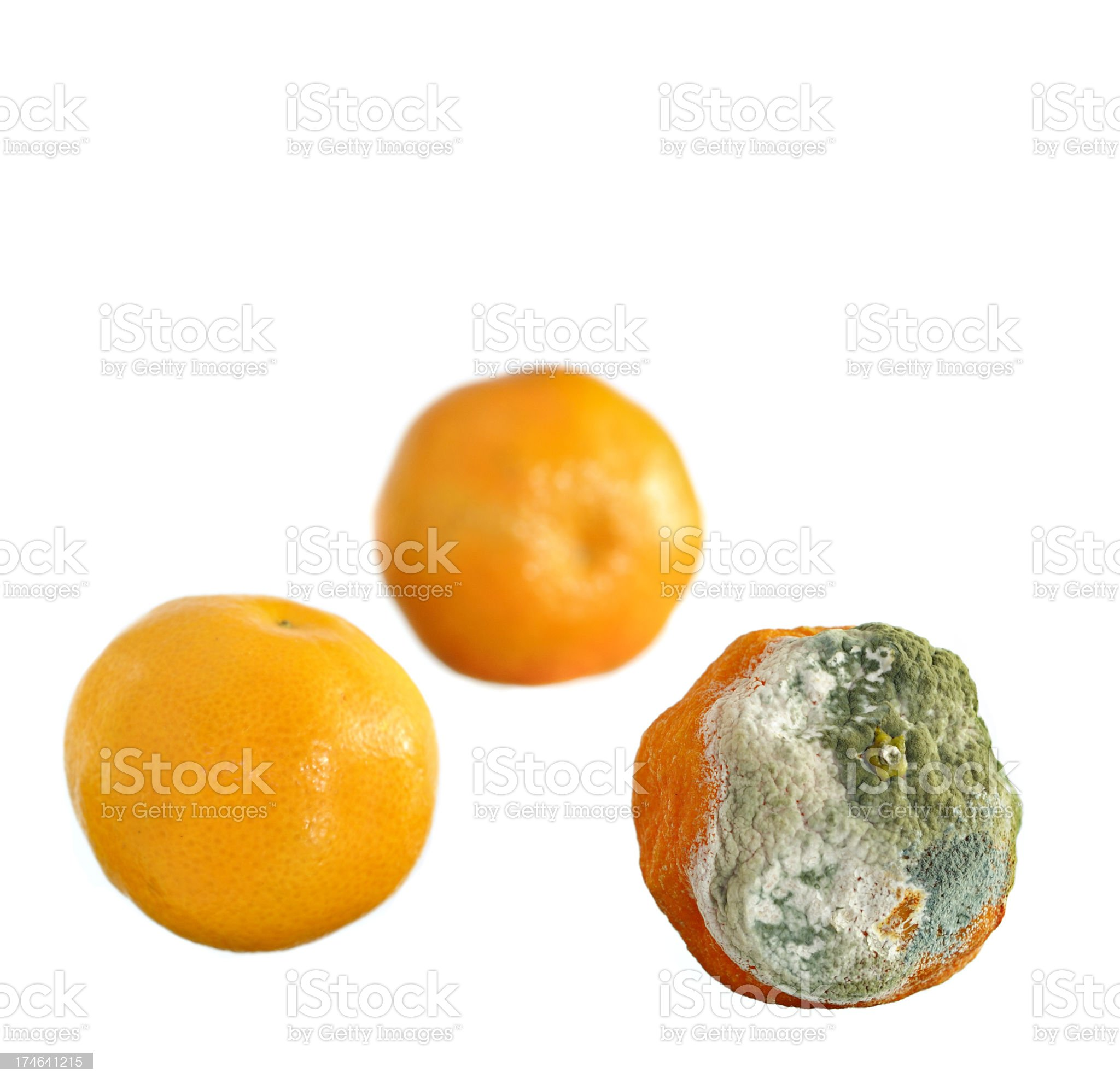 Satsumas Isolated on White royalty-free stock photo