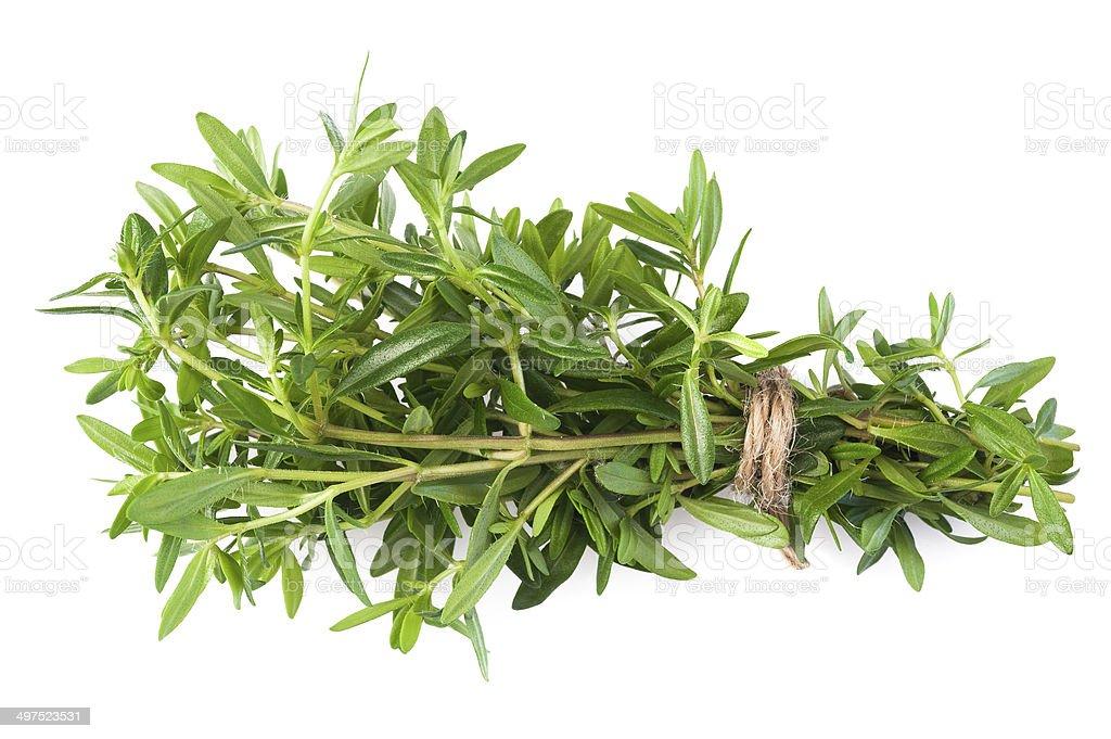 satureja montana stock photo