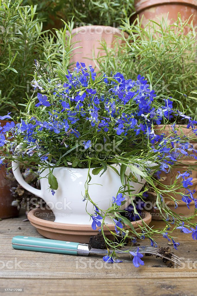 Sauce Boat with blue Lobelia and a Fork stock photo