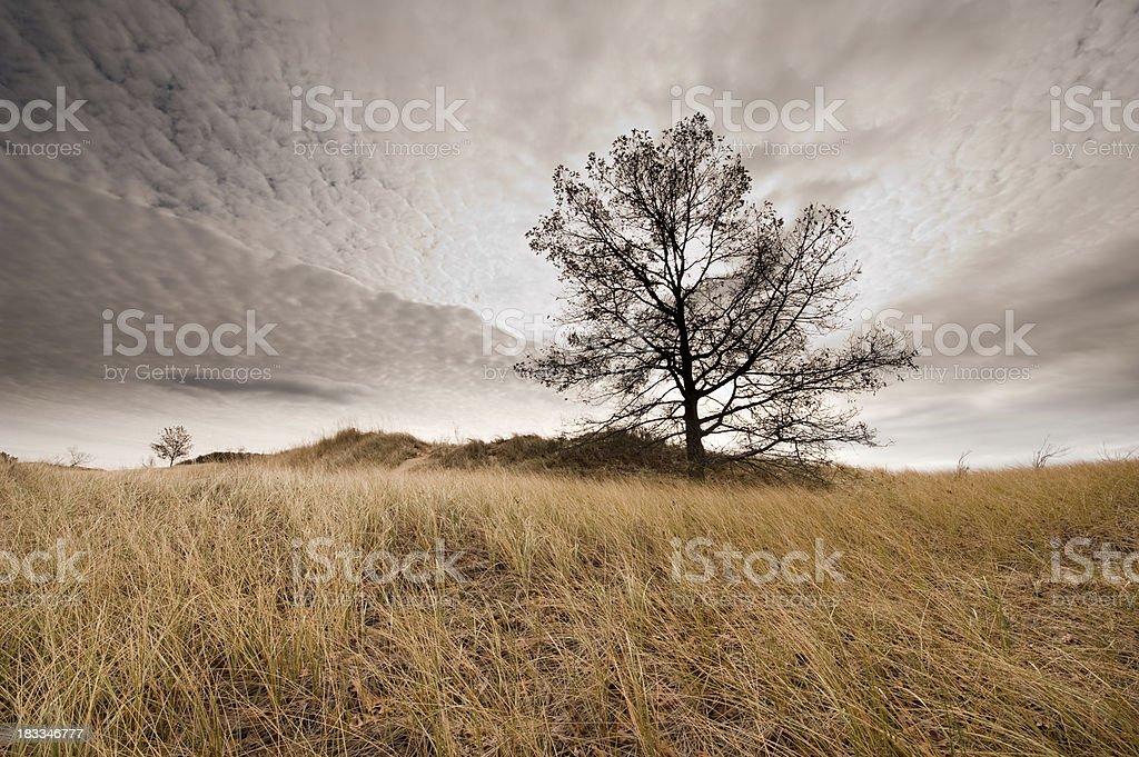 Saugatuck dunes stock photo