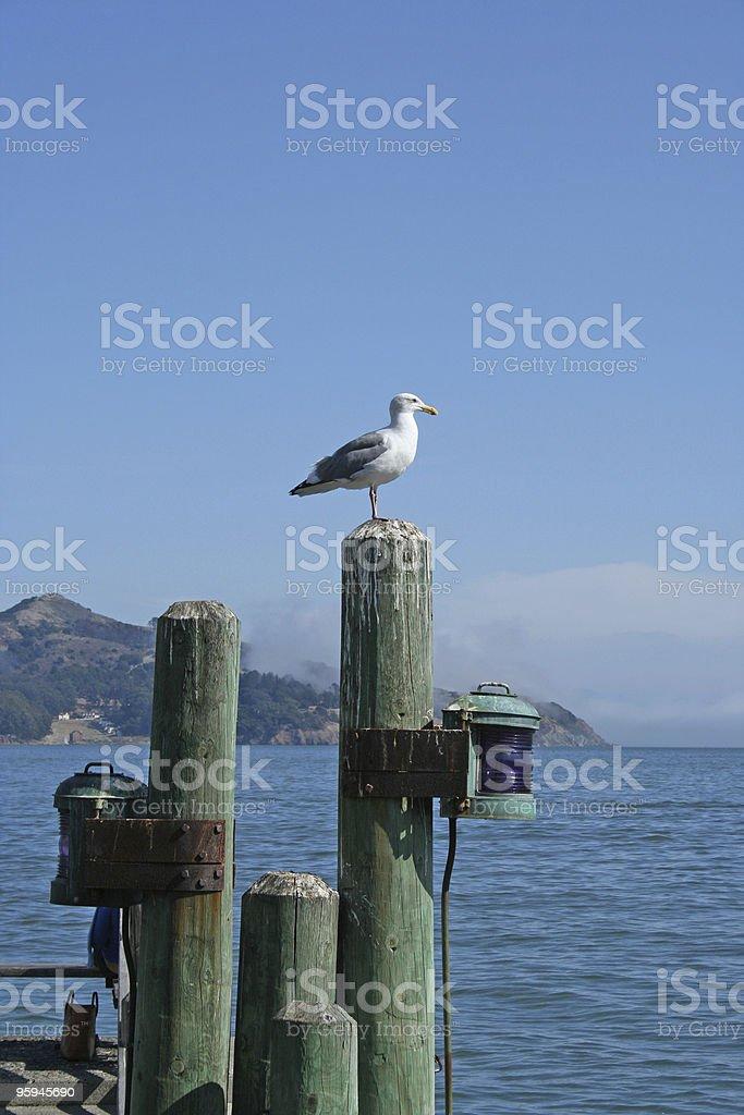 Sausalito Seagull on Guard royalty-free stock photo