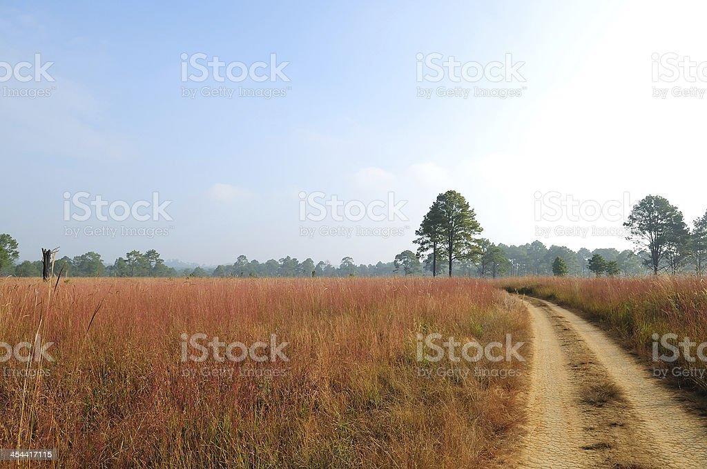 savanna forest stock photo