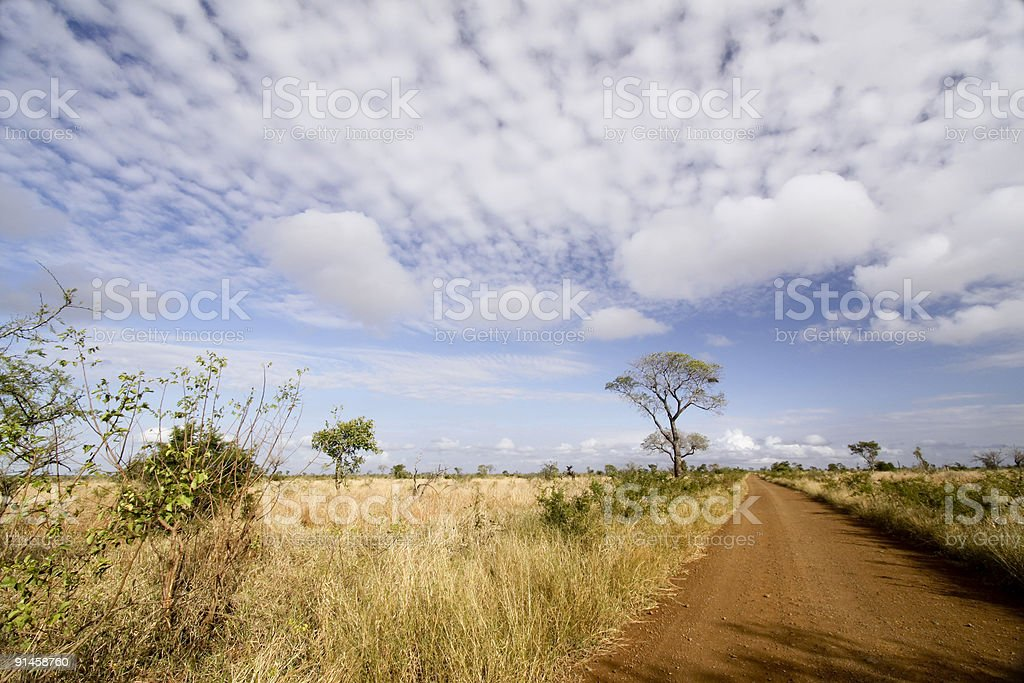 Savanna in Kruger Park, South Africa royalty-free stock photo