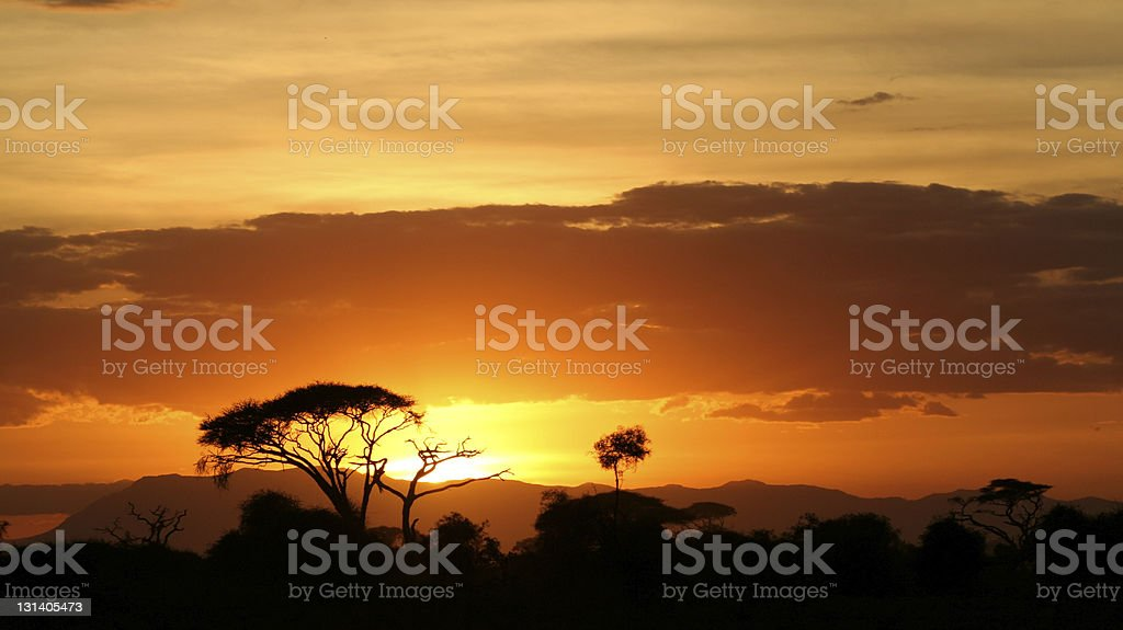 Savanna landscape at sunset stock photo