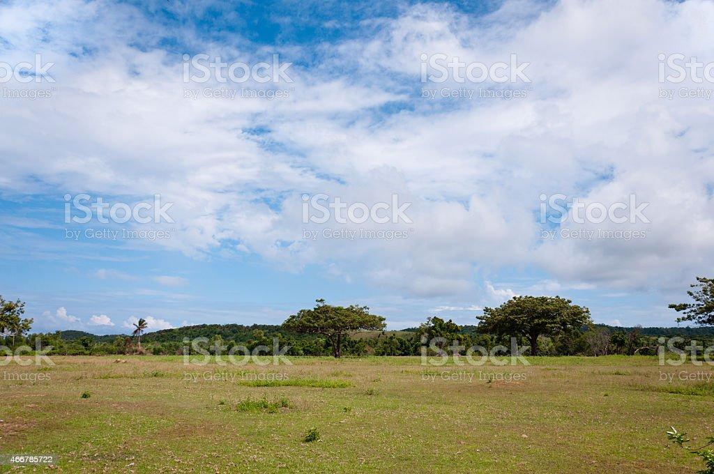 Savanna stock photo