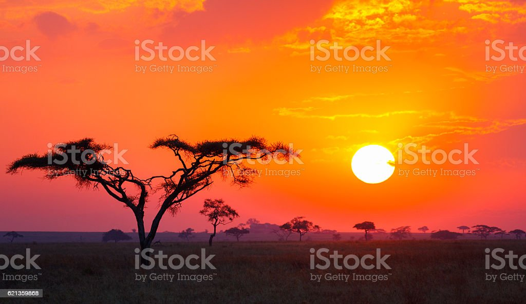 Savanna Sunrise and Acacia Tree in Tanzania Africa stock photo