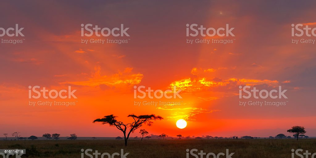 Savanna Sunrise and Acacia Tree, Serengeti, Tanzania Africa stock photo