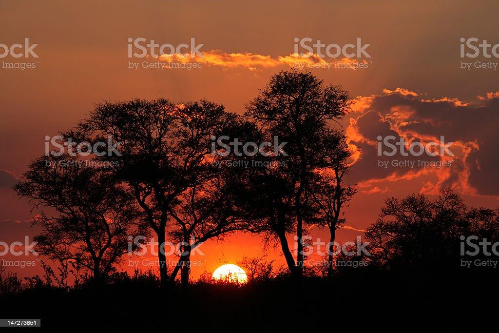 Savanna sunset royalty-free stock photo
