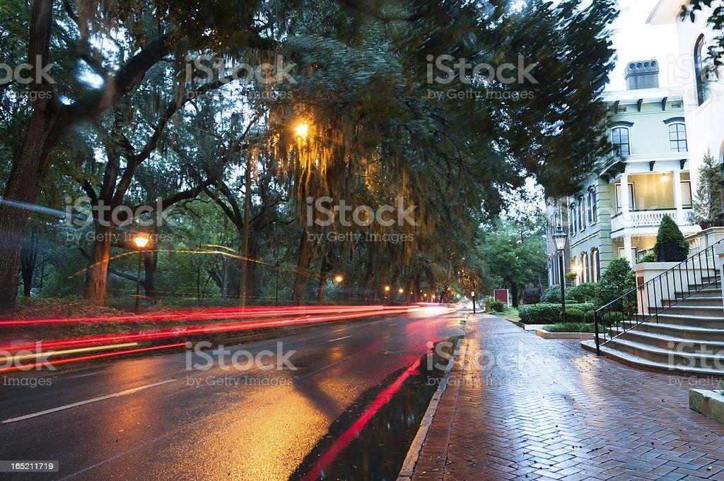 Savannah After the Rain royalty-free stock photo