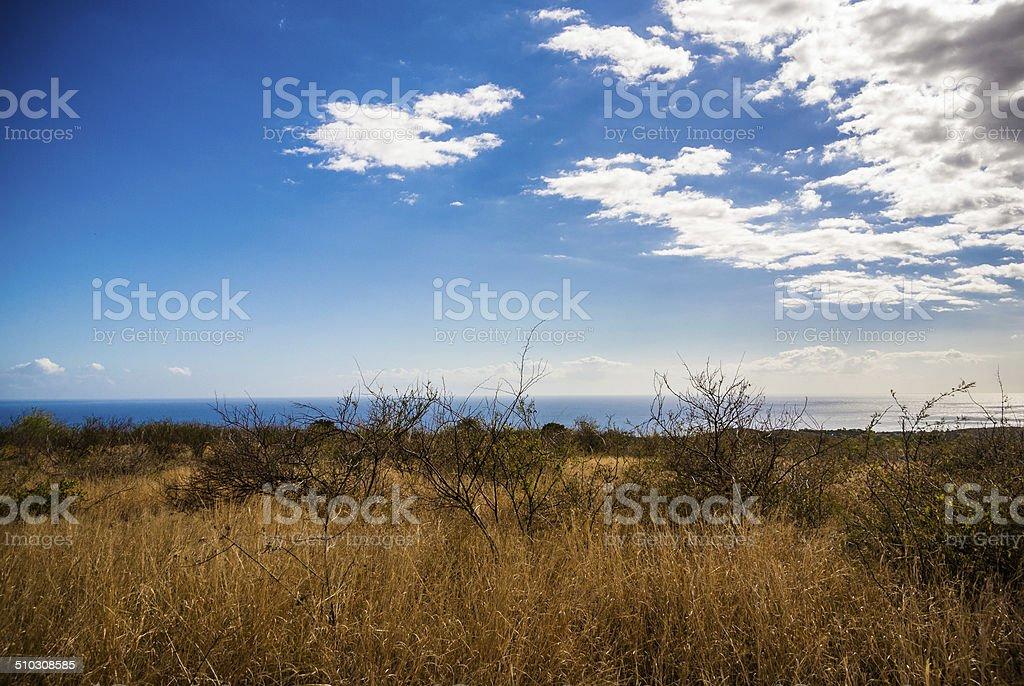 Savannah in Island of Reunion, Landscape, Hiking stock photo