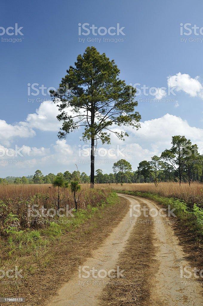 Savannah meadow and pine at Thung Salaeng Luang National Park. royalty-free stock photo