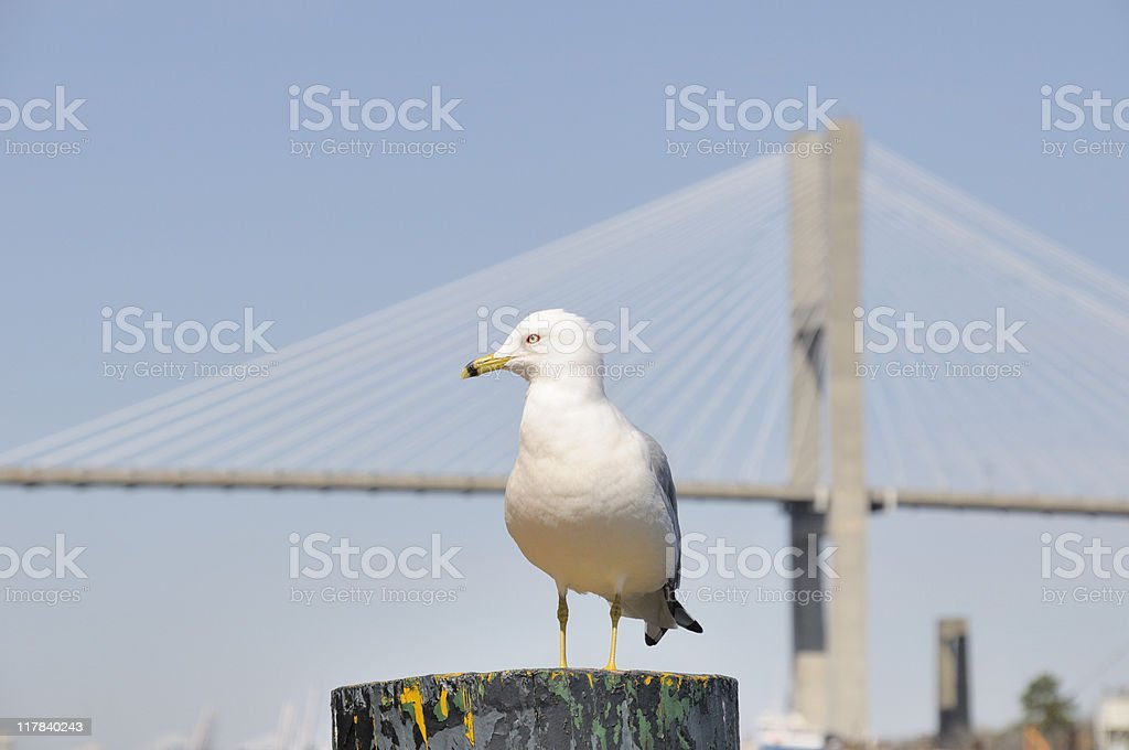 Savannah River, Georgia stock photo