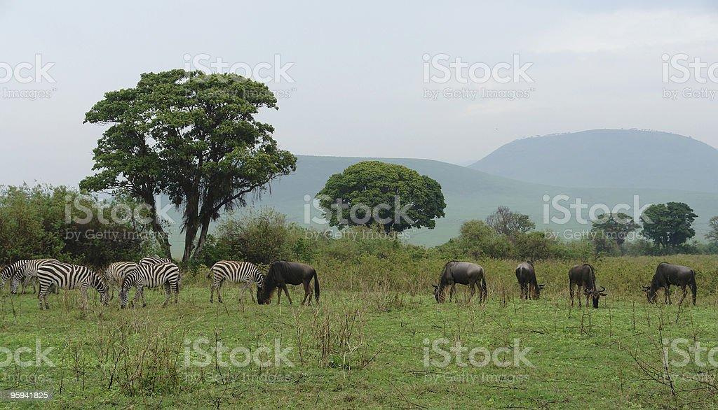 savannah scenery with Serengeti animals royalty-free stock photo