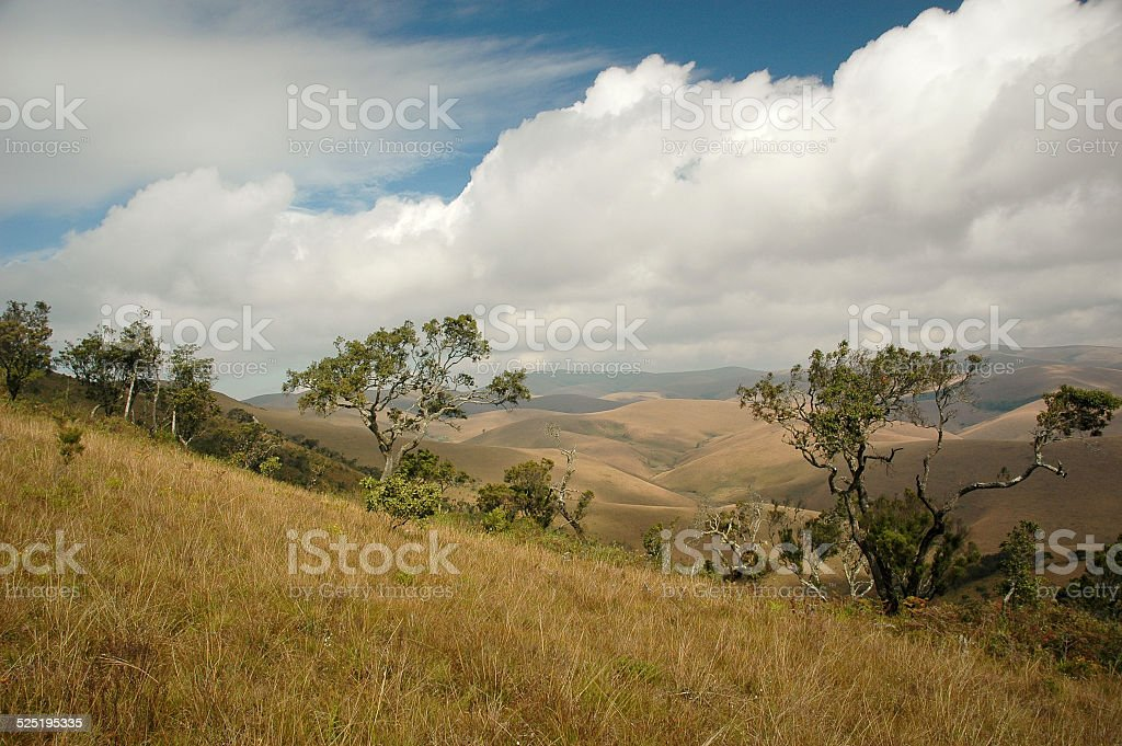 Savannah Trees and Cloudscape in Malawi Africa stock photo