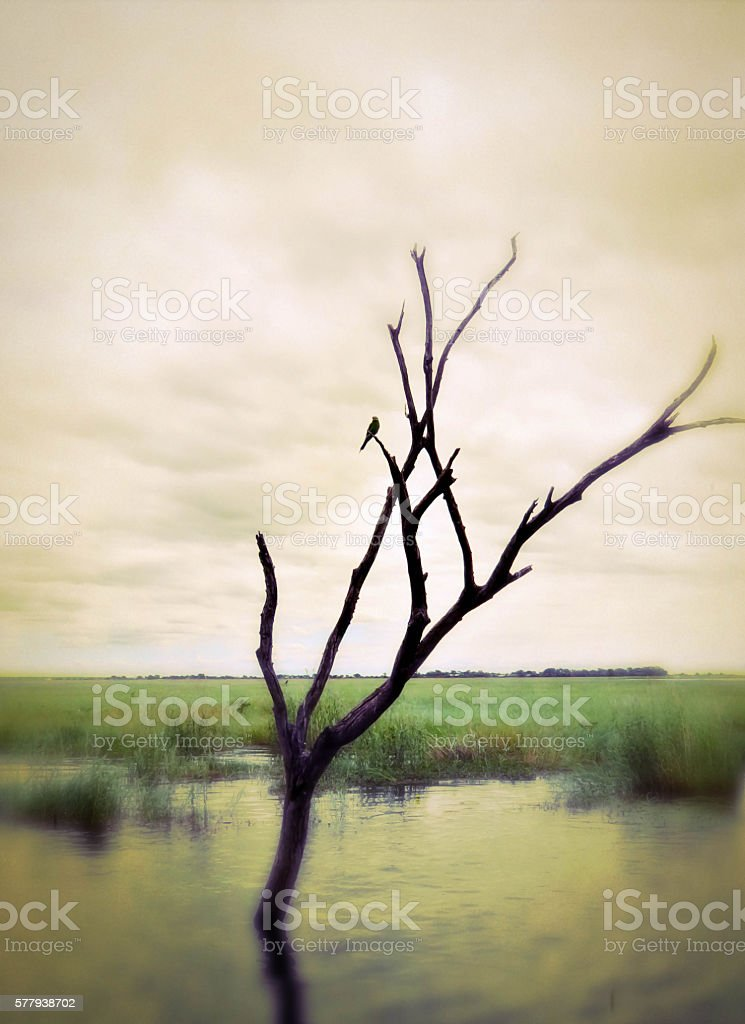 Savannah Water South Africa Photograph Watercolor Effect stock photo