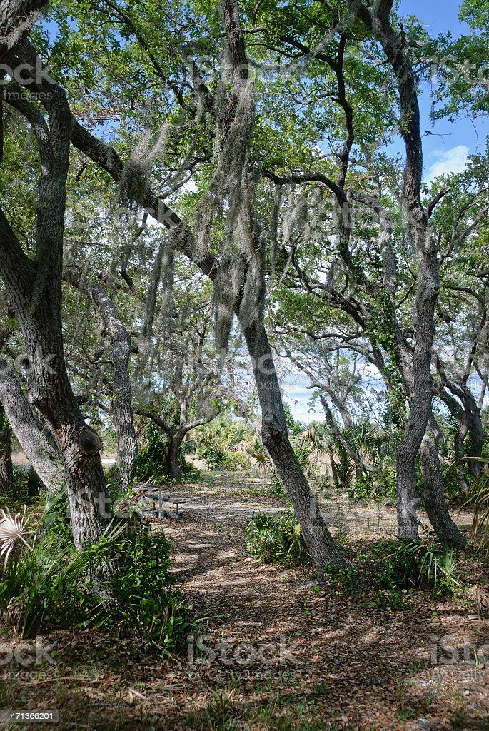 Savannas in South Florida with spanish moss & pathway stock photo
