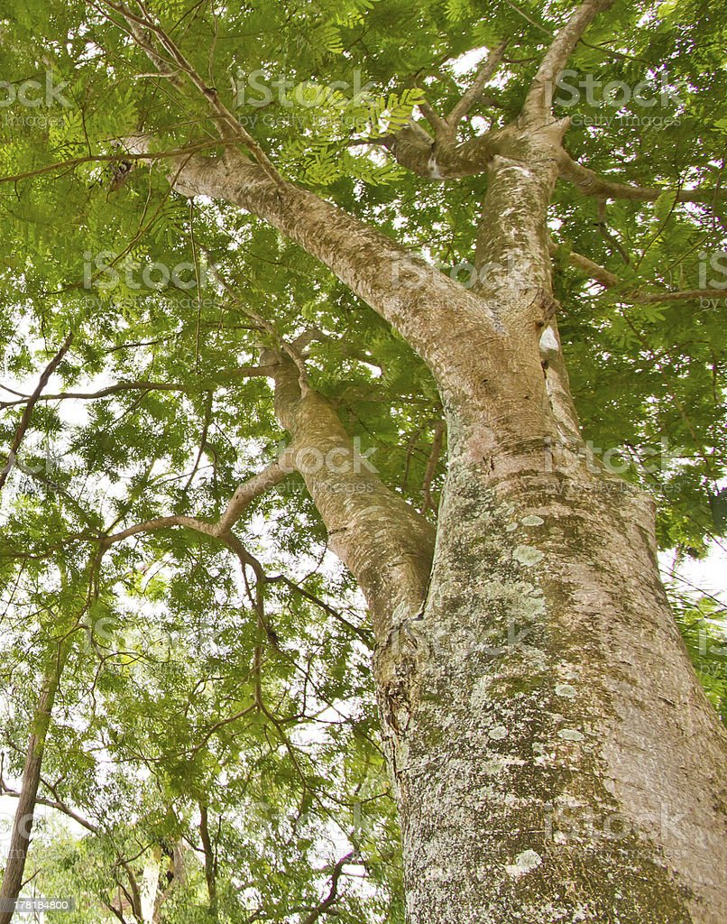 Save our trees, protect greens royalty-free stock photo