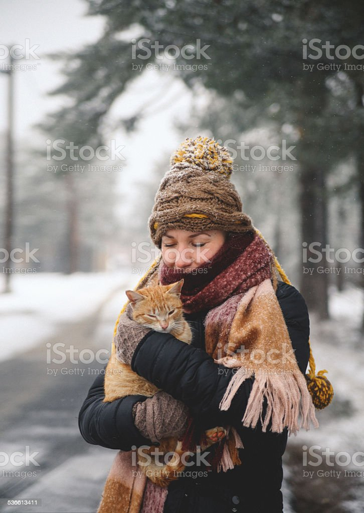 Save the stray cats in winter stock photo